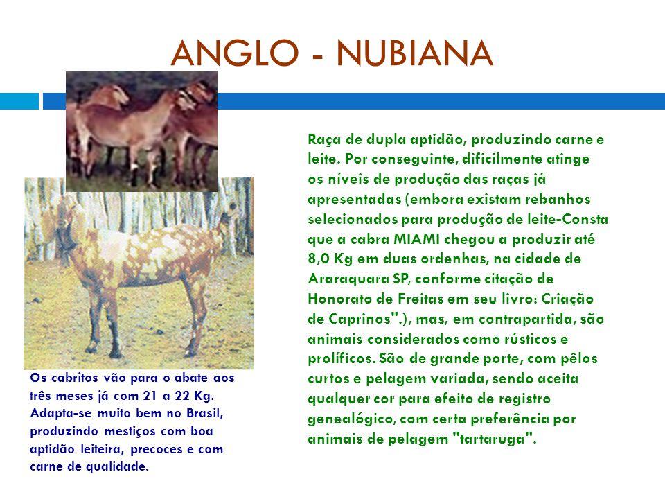 ANGLO - NUBIANA Raça de dupla aptidão, produzindo carne e leite. Por conseguinte, dificilmente atinge os níveis de produção das raças já apresentadas