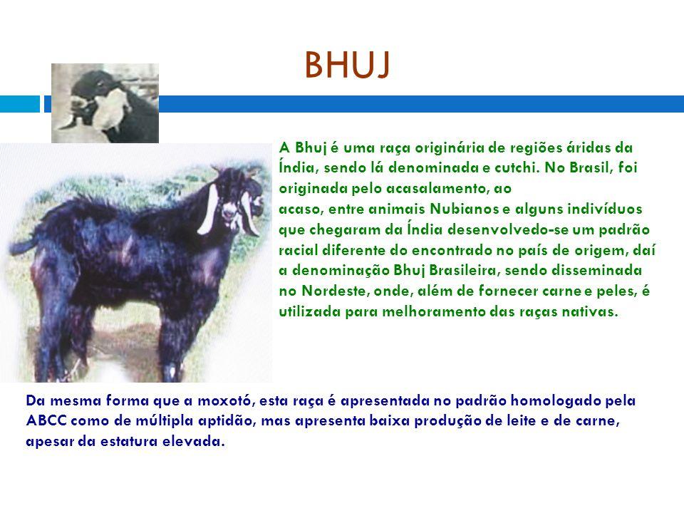 BHUJ A Bhuj é uma raça originária de regiões áridas da Índia, sendo lá denominada e cutchi. No Brasil, foi originada pelo acasalamento, ao acaso, entr