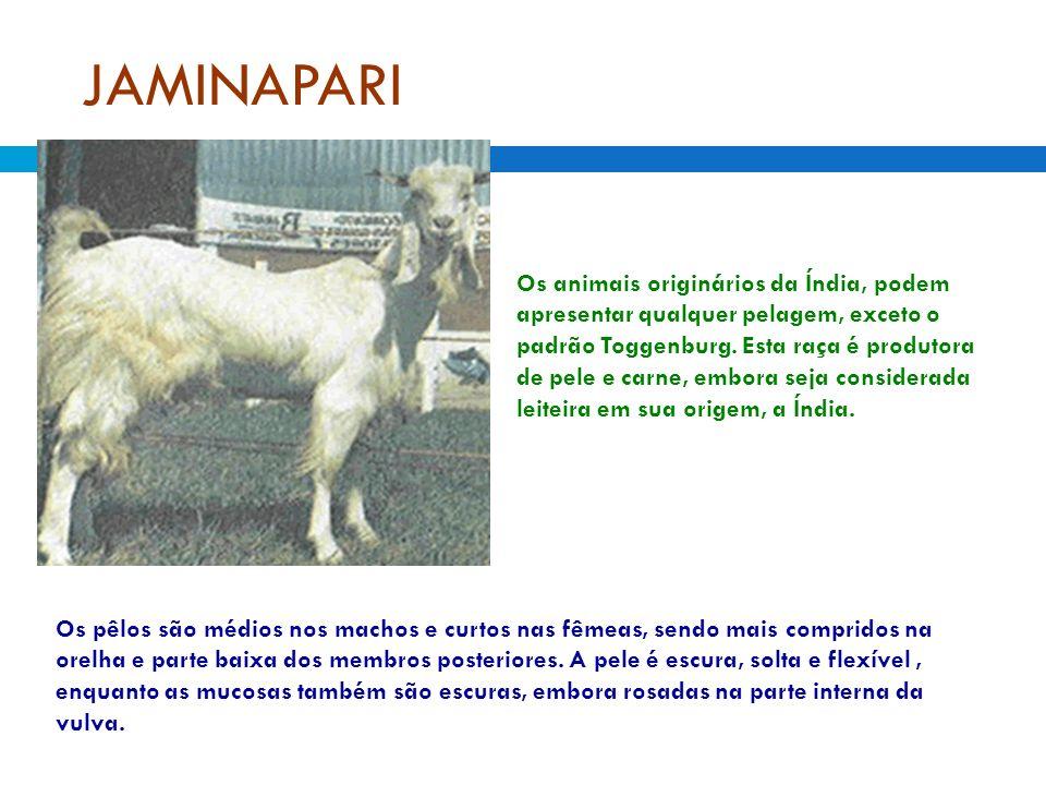 JAMINAPARI Os animais originários da Índia, podem apresentar qualquer pelagem, exceto o padrão Toggenburg. Esta raça é produtora de pele e carne, embo