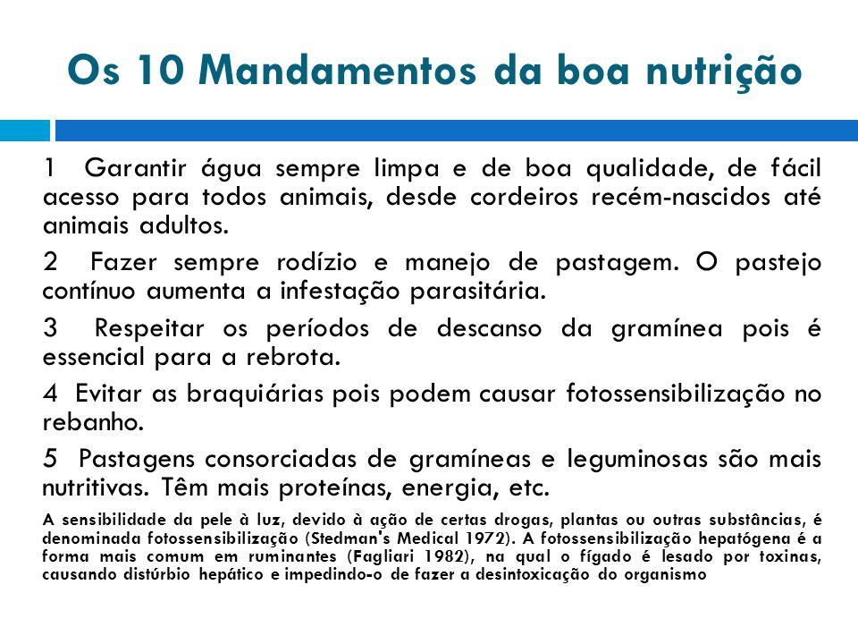 Os 10 Mandamentos da boa nutrição 1 Garantir água sempre limpa e de boa qualidade, de fácil acesso para todos animais, desde cordeiros recém-nascidos até animais adultos.