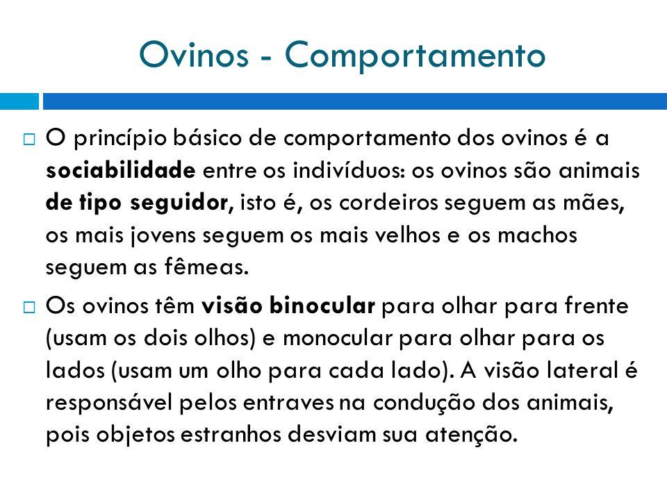 Ovinos - Comportamento O princípio básico de comportamento dos ovinos é a sociabilidade entre os indivíduos: os ovinos são animais de tipo seguidor, i