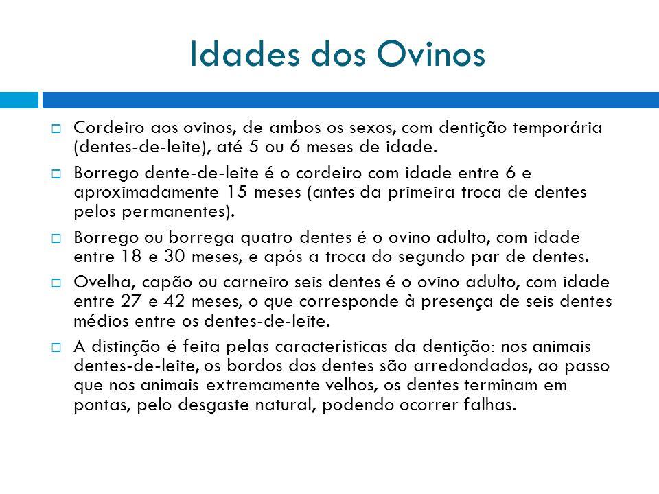 Idades dos Ovinos Cordeiro aos ovinos, de ambos os sexos, com dentição temporária (dentes-de-leite), até 5 ou 6 meses de idade. Borrego dente-de-leite