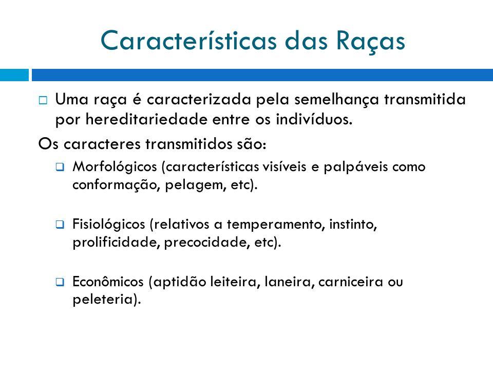 Características das Raças Uma raça é caracterizada pela semelhança transmitida por hereditariedade entre os indivíduos. Os caracteres transmitidos são