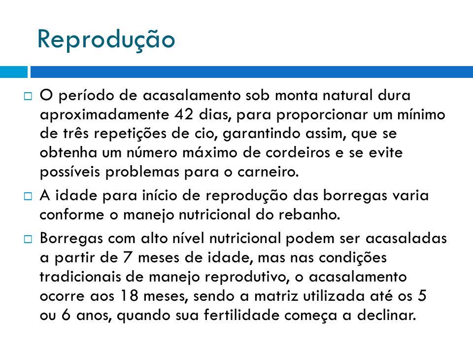 Reprodução O período de acasalamento sob monta natural dura aproximadamente 42 dias, para proporcionar um mínimo de três repetições de cio, garantindo