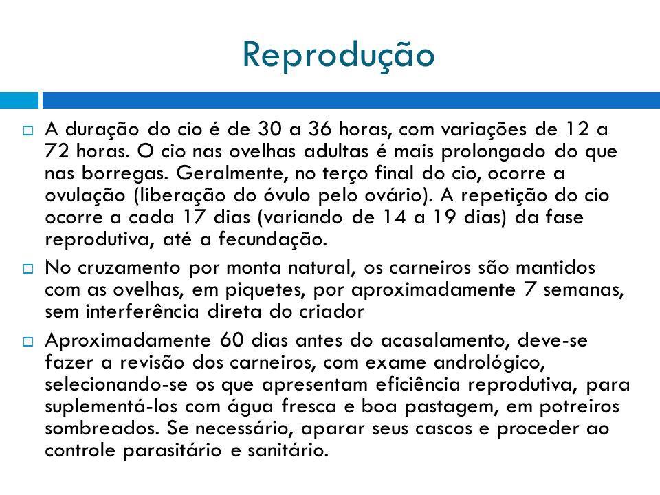 Reprodução A duração do cio é de 30 a 36 horas, com variações de 12 a 72 horas.