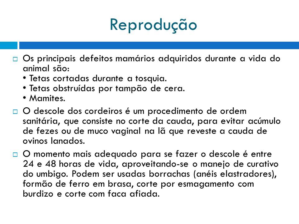 Reprodução Os principais defeitos mamários adquiridos durante a vida do animal são: Tetas cortadas durante a tosquia. Tetas obstruídas por tampão de c