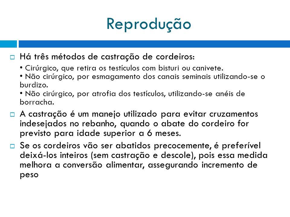 Reprodução Há três métodos de castração de cordeiros: Cirúrgico, que retira os testículos com bisturi ou canivete. Não cirúrgico, por esmagamento dos
