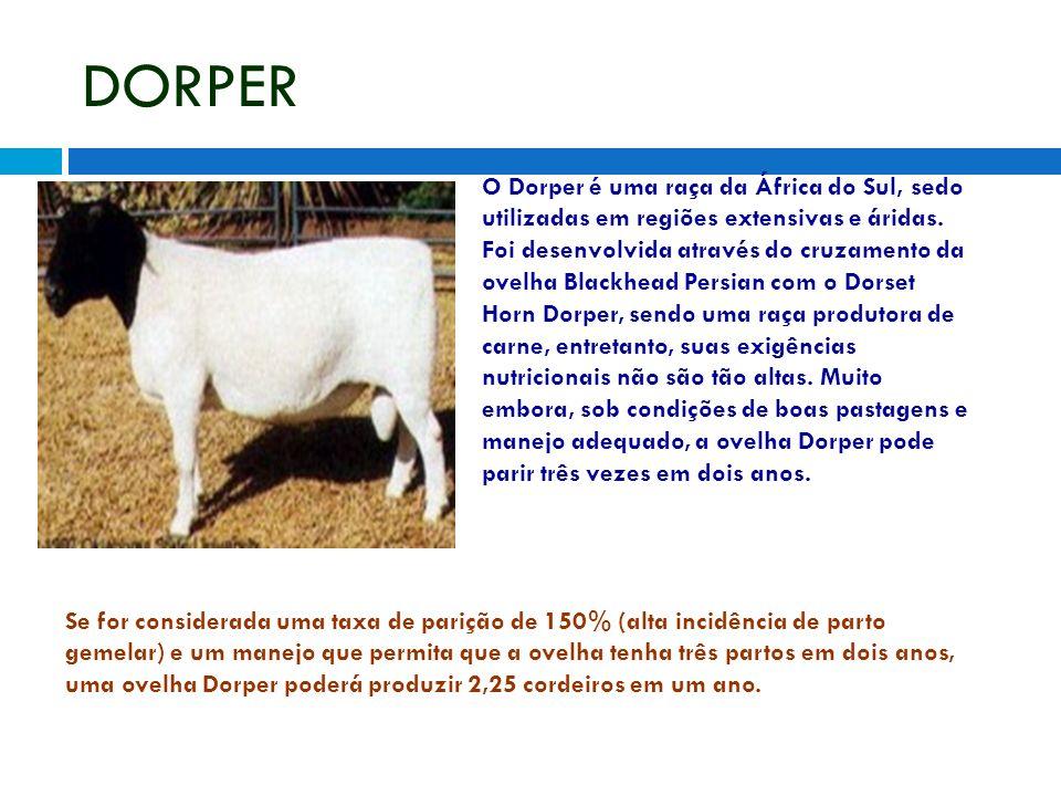 DORPER O Dorper é uma raça da África do Sul, sedo utilizadas em regiões extensivas e áridas. Foi desenvolvida através do cruzamento da ovelha Blackhea