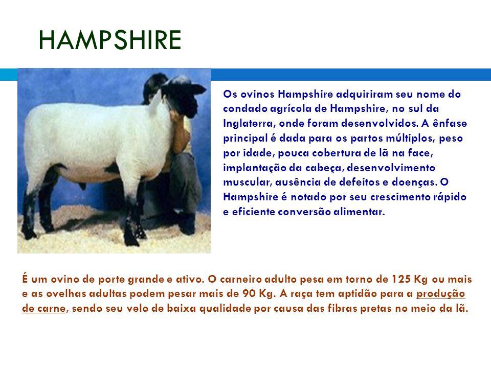 HAMPSHIRE Os ovinos Hampshire adquiriram seu nome do condado agrícola de Hampshire, no sul da Inglaterra, onde foram desenvolvidos. A ênfase principal