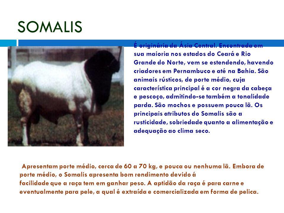 SOMALIS É originária da Ásia Central. Encontrada em sua maioria nos estados do Ceará e Rio Grande do Norte, vem se estendendo, havendo criadores em Pe