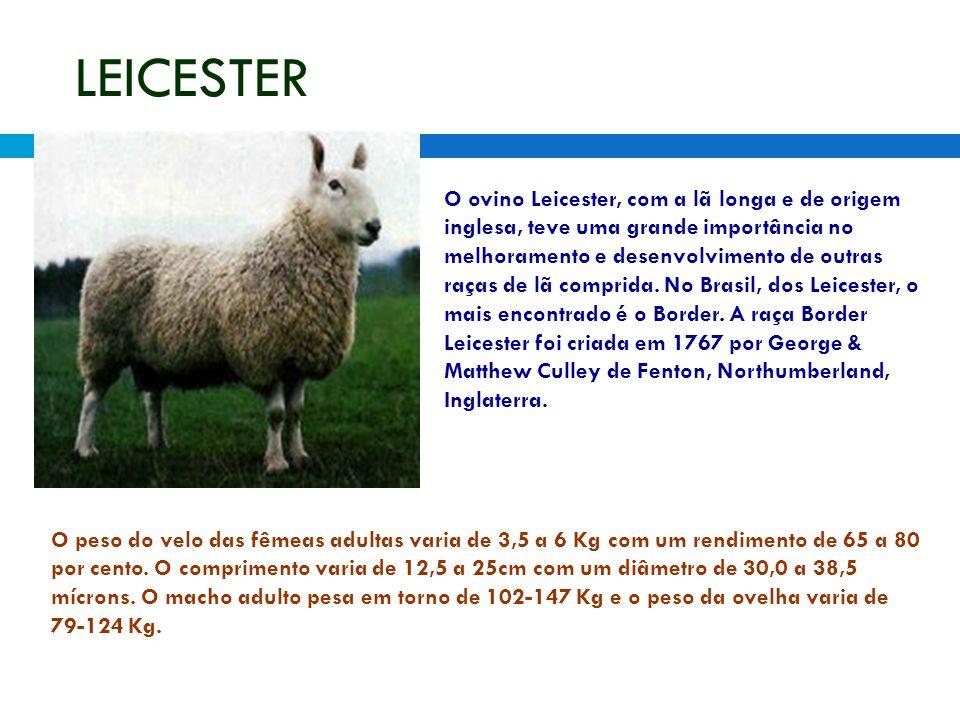 LEICESTER O ovino Leicester, com a lã longa e de origem inglesa, teve uma grande importância no melhoramento e desenvolvimento de outras raças de lã comprida.