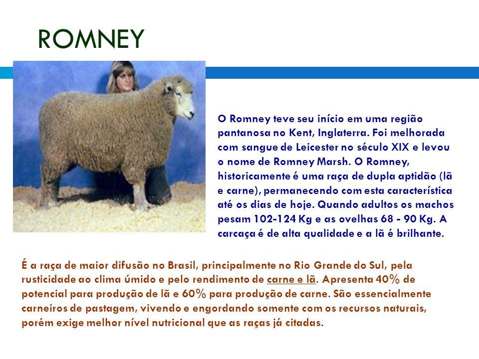 ROMNEY O Romney teve seu início em uma região pantanosa no Kent, Inglaterra. Foi melhorada com sangue de Leicester no século XIX e levou o nome de Rom