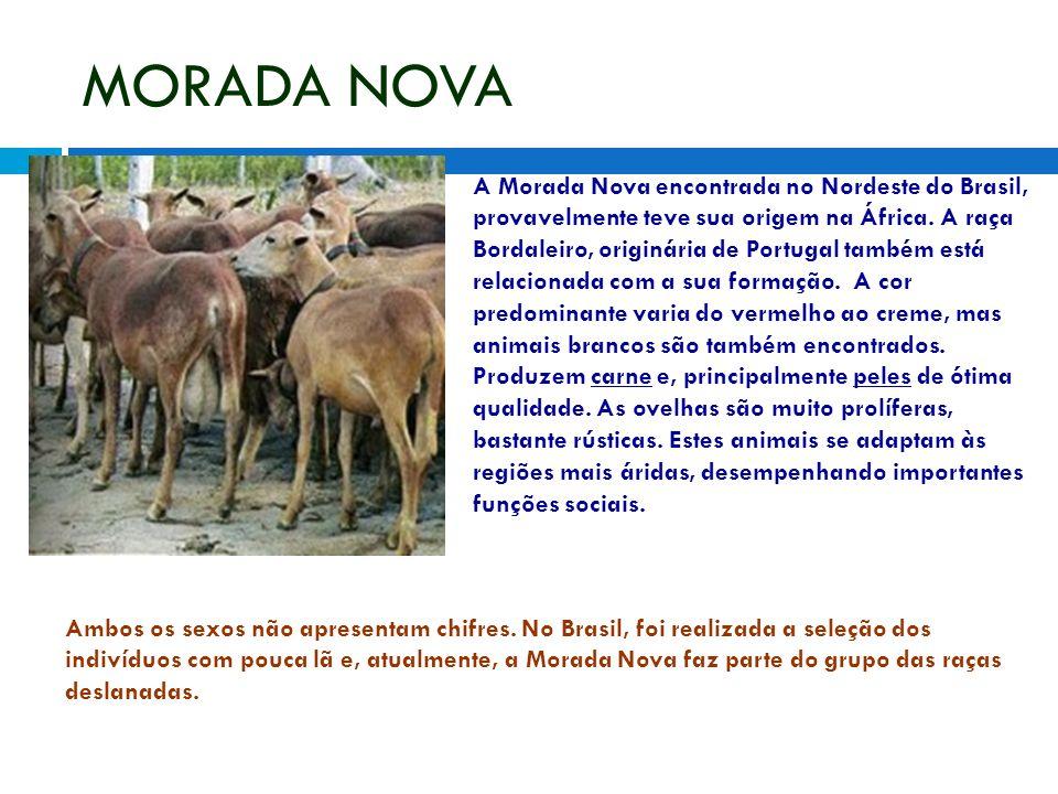 MORADA NOVA A Morada Nova encontrada no Nordeste do Brasil, provavelmente teve sua origem na África. A raça Bordaleiro, originária de Portugal também