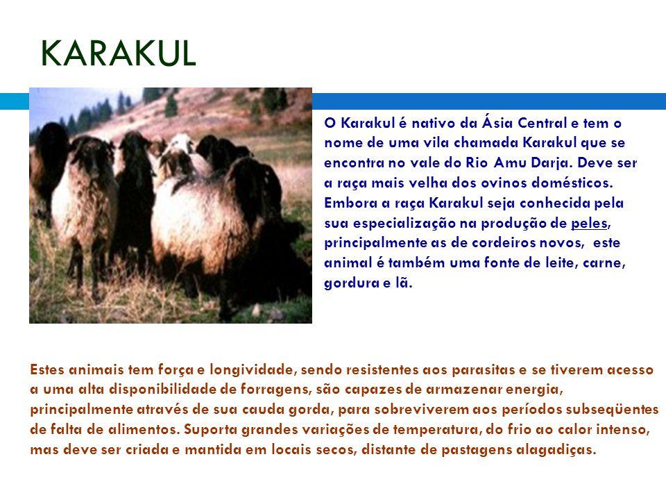 KARAKUL O Karakul é nativo da Ásia Central e tem o nome de uma vila chamada Karakul que se encontra no vale do Rio Amu Darja. Deve ser a raça mais vel