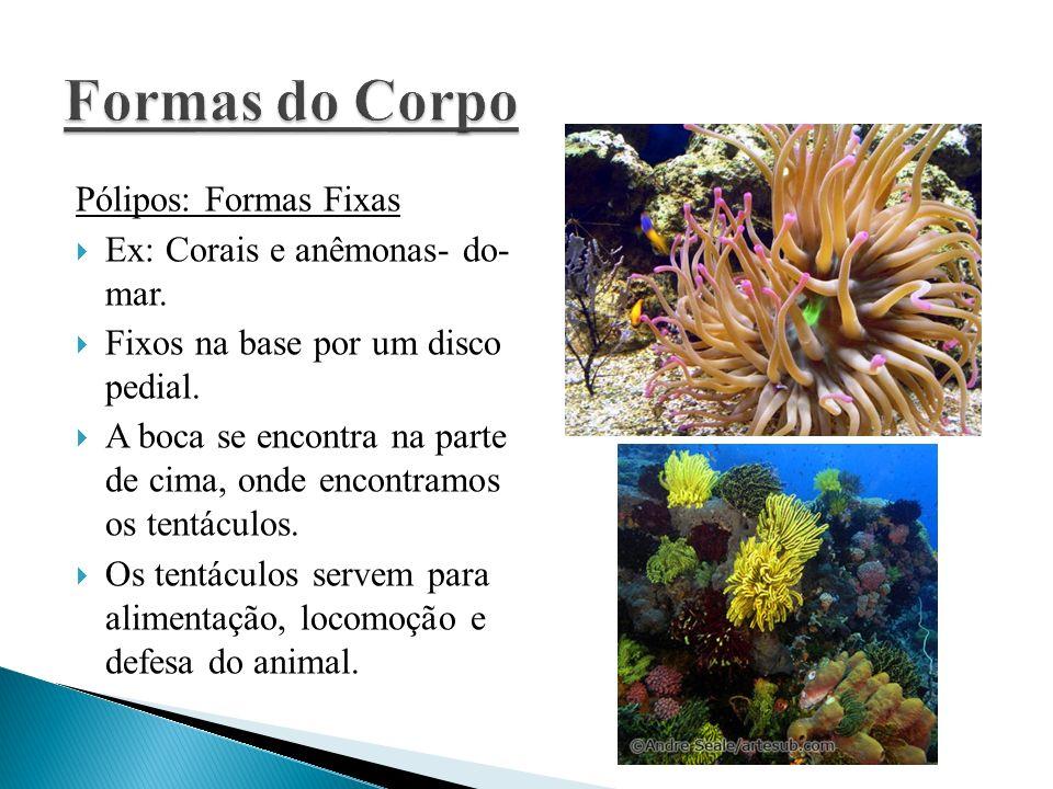 Pólipos: Formas Fixas Ex: Corais e anêmonas- do- mar. Fixos na base por um disco pedial. A boca se encontra na parte de cima, onde encontramos os tent