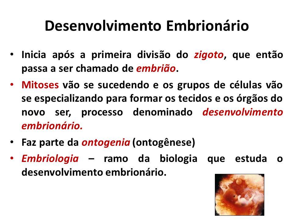 ECTODERMEMESODERMEENDODERME Folheto mais externo Situa-se entre a ectoderme e a endoderme Folheto mais interno Epiderme e anexos (pelos, unhas, glândulas sebáceas e sudoríparas) Sistema nervoso (Tecido epitelial) (Tecido nervoso) Derme Sistema muscular Sistema Esquelético Sistema Cardiovascular Sistema Urogenital (Tecidos conjuntivos) (Tecido epitelial) (Tecido muscular) Revestimento interno do sistema digestório e anexos (glândulas salivares, fígado, pâncreas) Sistema respiratório Revestimento interno da bexiga (Tecido epitelial) FOLHETOS GERMINATIVOS OU EMBRIONÁRIOS Lâminas celulares que na organogênese darão origem aos tecidos e órgãos.