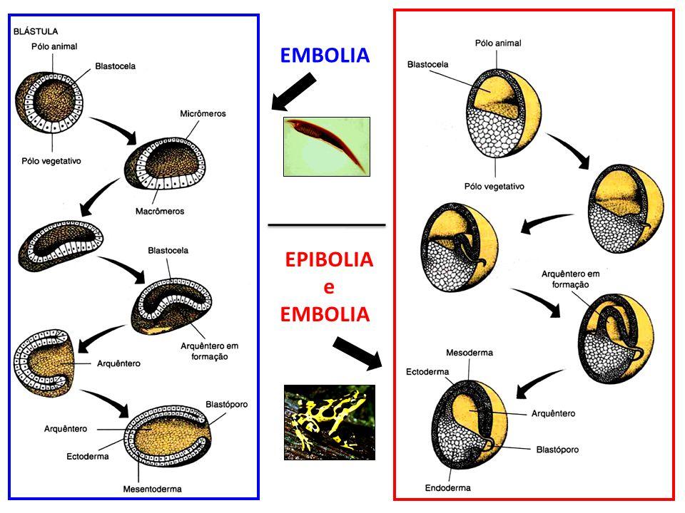EPIBOLIA e EMBOLIA