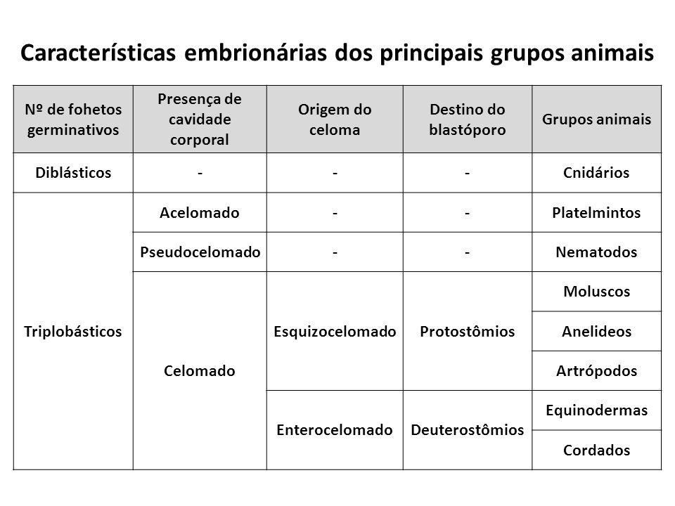 Nº de fohetos germinativos Presença de cavidade corporal Origem do celoma Destino do blastóporo Grupos animais Diblásticos---Cnidários Triplobásticos Acelomado--Platelmintos Pseudocelomado--Nematodos Celomado EsquizocelomadoProtostômios Moluscos Anelideos Artrópodos EnterocelomadoDeuterostômios Equinodermas Cordados Características embrionárias dos principais grupos animais