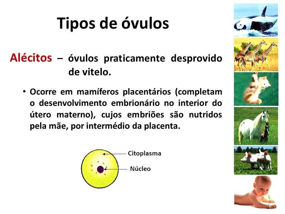 Epibolia (recobrimento) – processo caracterizado pela rápida divisão dos micrômeros, que acabam recobrindo os macrômeros.