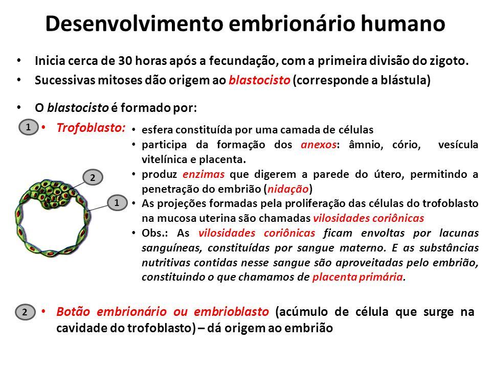 Desenvolvimento embrionário humano Inicia cerca de 30 horas após a fecundação, com a primeira divisão do zigoto.