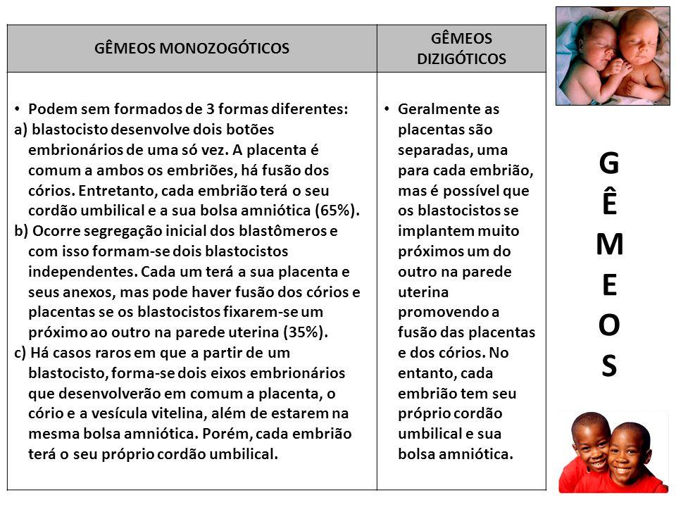 GÊMEOS MONOZOGÓTICOS GÊMEOS DIZIGÓTICOS Podem sem formados de 3 formas diferentes: a) blastocisto desenvolve dois botões embrionários de uma só vez.
