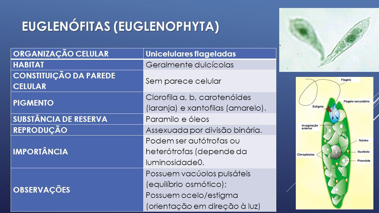 CRISÓFITAS (ALGAS DOURADAS) CHRYSOPHYTA ORGANIZAÇÃO CELULAR Predominantemente unicelulares HABITAT Diversos ambientes, mas são predominantemente marinhas.