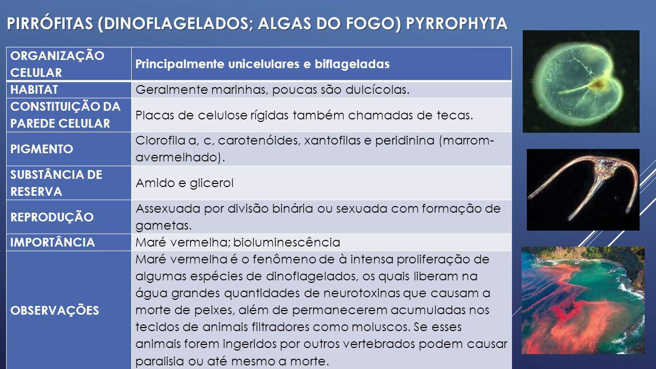 CLORÓFITAS (ALGAS VERDES) CHLOROPHYTA ORGANIZAÇÃO CELULAR Uni e pluricelulares HABITAT Dulcícolas, marinhas e ambientes terrestres úmidos.