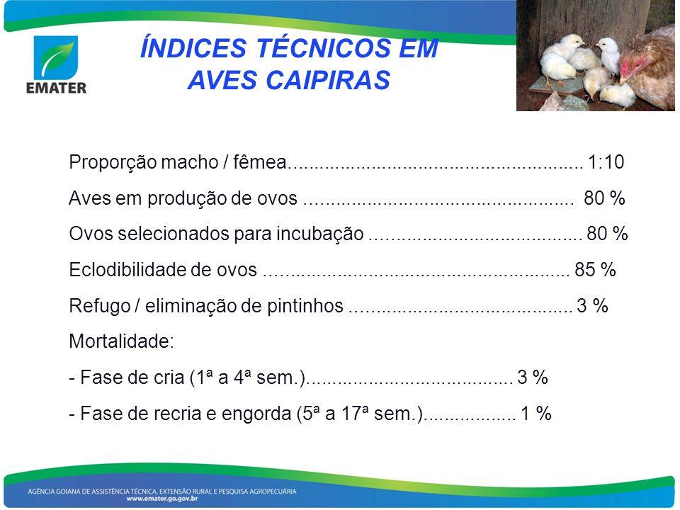 ÍNDICES TÉCNICOS EM AVES CAIPIRAS Proporção macho / fêmea......................................................... 1:10 Aves em produção de ovos......