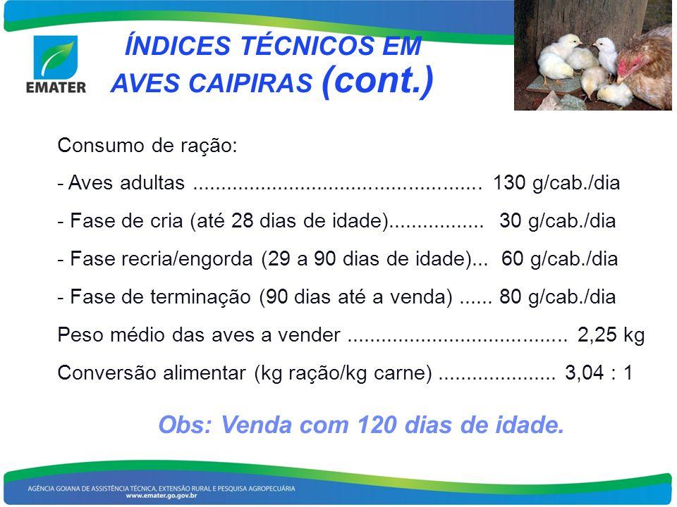 ÍNDICES TÉCNICOS EM AVES CAIPIRAS (cont.) Consumo de ração: - Aves adultas................................................... 130 g/cab./dia - Fase de