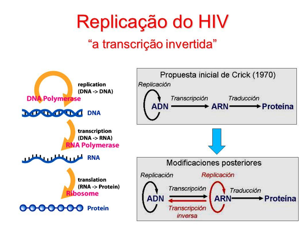 Replicação do HIV a transcrição invertida