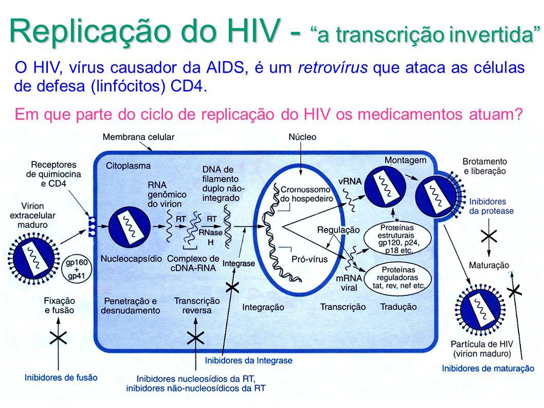 Replicação do HIV - a transcrição invertida O HIV, vírus causador da AIDS, é um retrovírus que ataca as células de defesa (linfócitos) CD4. Em que par