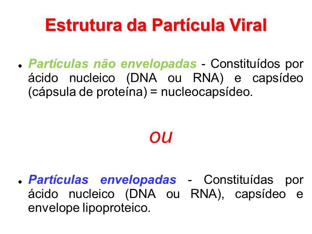 Estrutura da Partícula Viral Partículas não envelopadas - Constituídos por ácido nucleico (DNA ou RNA) e capsídeo (cápsula de proteína) = nucleocapsíd