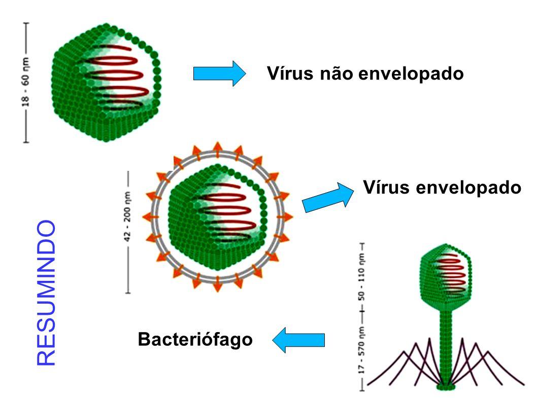 Vírus não envelopado Vírus envelopado Bacteriófago RESUMINDO