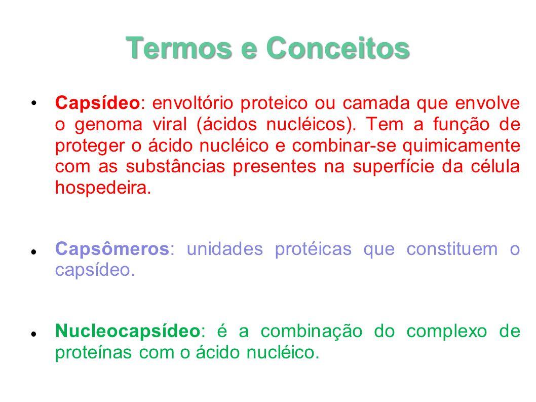 Termos e Conceitos Capsídeo: envoltório proteico ou camada que envolve o genoma viral (ácidos nucléicos). Tem a função de proteger o ácido nucléico e