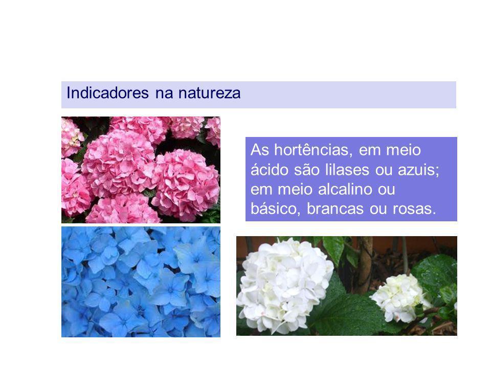 Indicadores na natureza As hortências, em meio ácido são lilases ou azuis; em meio alcalino ou básico, brancas ou rosas.