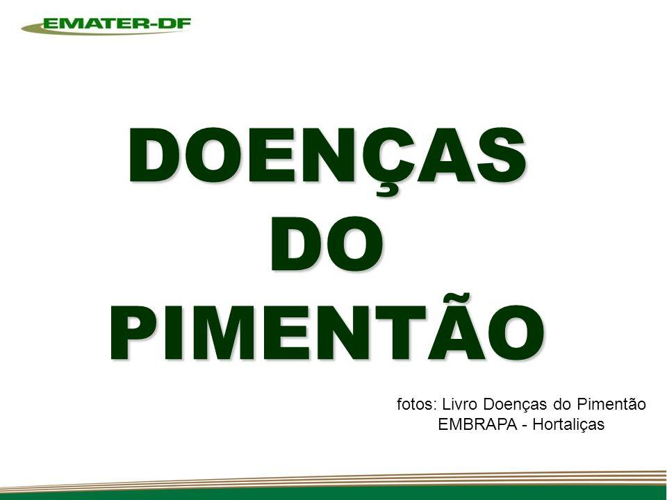 DOENÇAS DO PIMENTÃO fotos: Livro Doenças do Pimentão EMBRAPA - Hortaliças