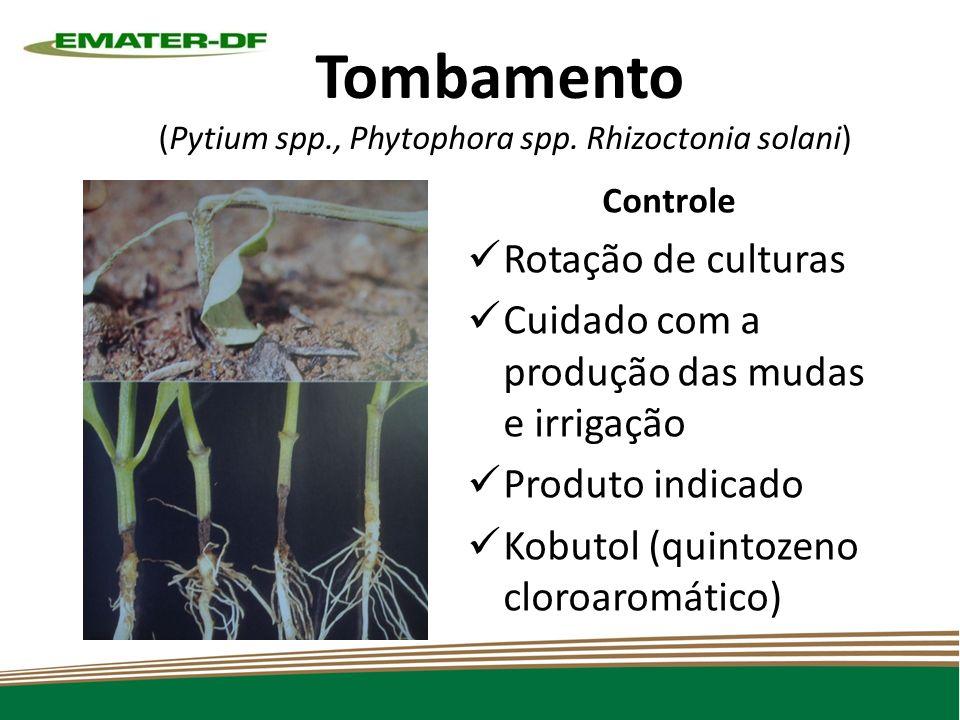 Tombamento (Pytium spp., Phytophora spp.