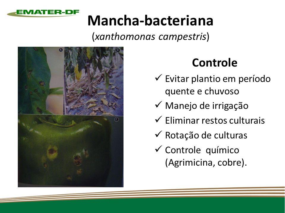 Mancha-bacteriana (xanthomonas campestris) Controle Evitar plantio em período quente e chuvoso Manejo de irrigação Eliminar restos culturais Rotação de culturas Controle químico (Agrimicina, cobre).