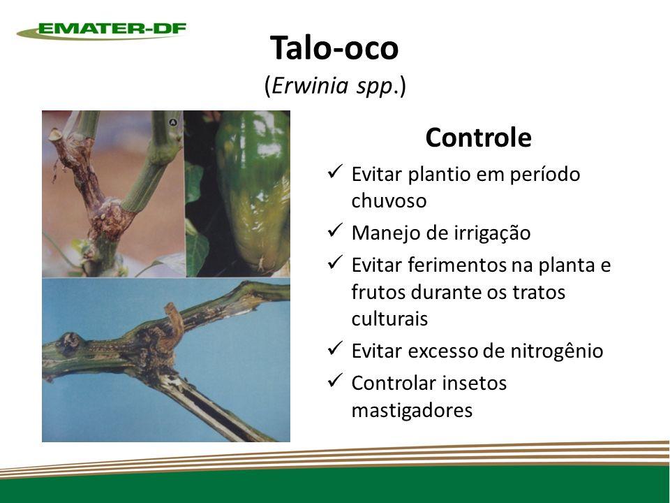 Talo-oco (Erwinia spp.) Controle Evitar plantio em período chuvoso Manejo de irrigação Evitar ferimentos na planta e frutos durante os tratos culturais Evitar excesso de nitrogênio Controlar insetos mastigadores