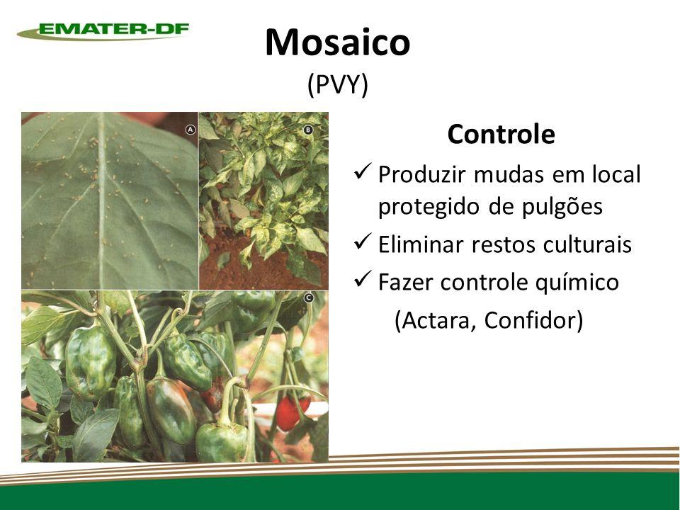 Mosaico (PVY) Controle Produzir mudas em local protegido de pulgões Eliminar restos culturais Fazer controle químico (Actara, Confidor)