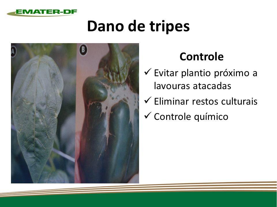 Dano de tripes Controle Evitar plantio próximo a lavouras atacadas Eliminar restos culturais Controle químico