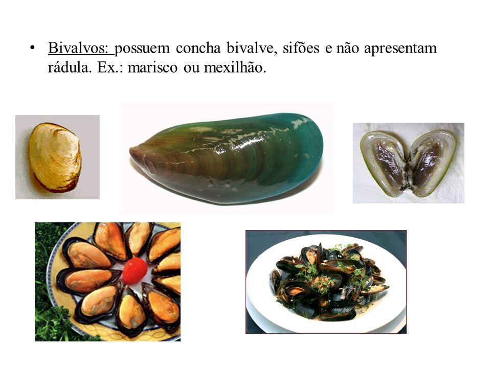 Bivalvos: possuem concha bivalve, sifões e não apresentam rádula. Ex.: marisco ou mexilhão.