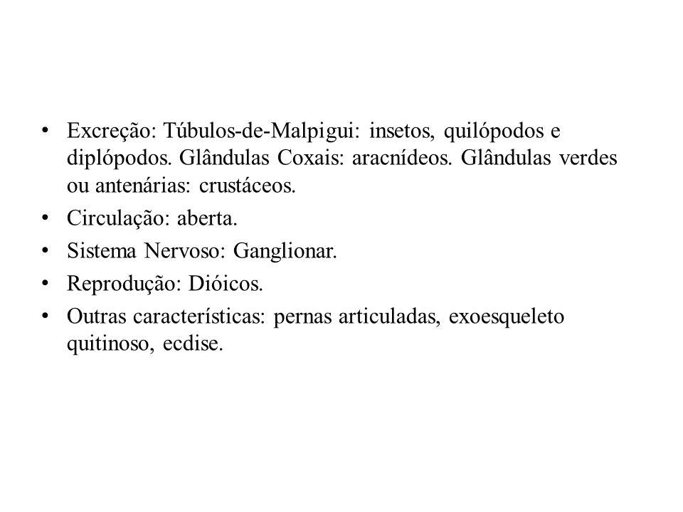Excreção: Túbulos-de-Malpigui: insetos, quilópodos e diplópodos. Glândulas Coxais: aracnídeos. Glândulas verdes ou antenárias: crustáceos. Circulação:
