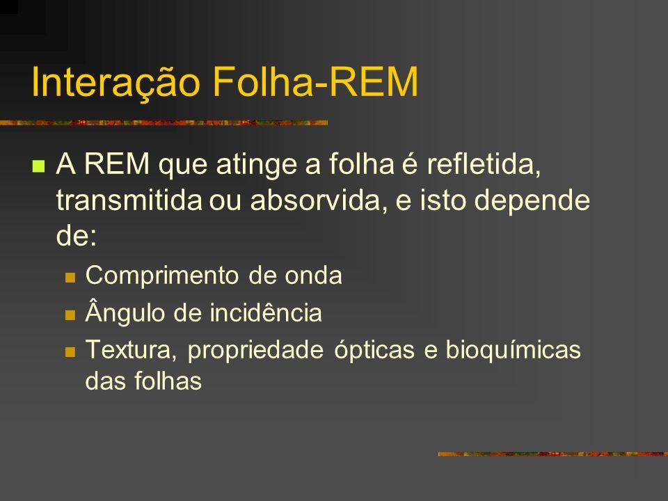 Interação Folha-REM A REM que atinge a folha é refletida, transmitida ou absorvida, e isto depende de: Comprimento de onda Ângulo de incidência Textur