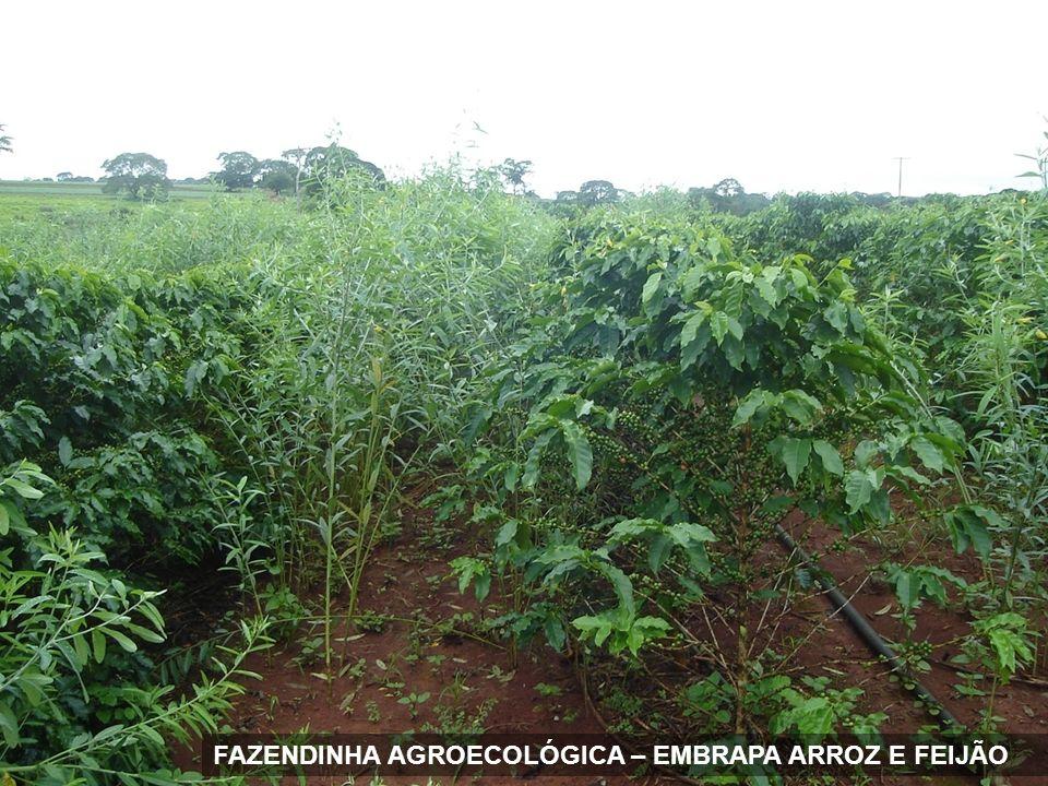 FAZENDINHA AGROECOLÓGICA – EMBRAPA ARROZ E FEIJÃO