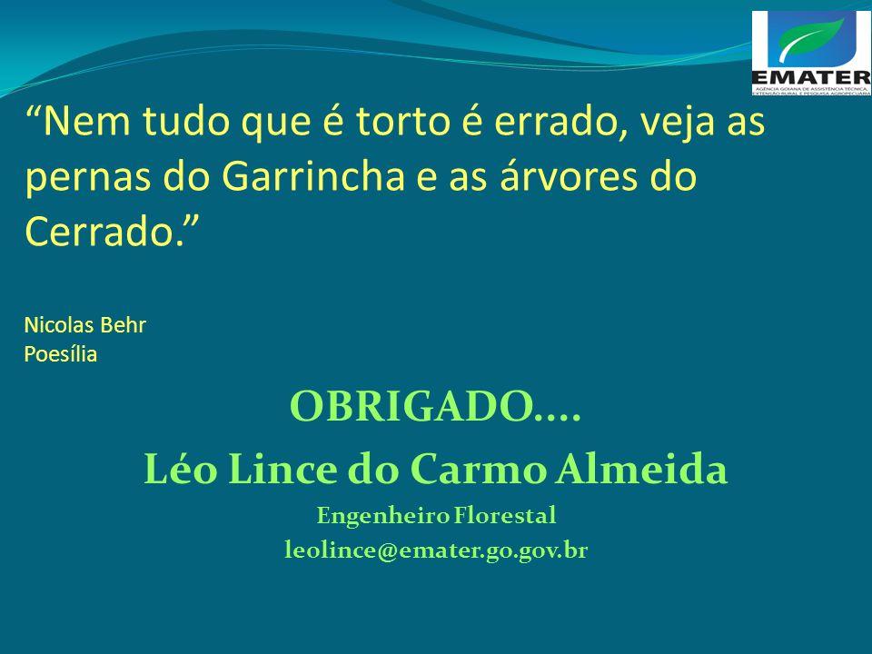 Nem tudo que é torto é errado, veja as pernas do Garrincha e as árvores do Cerrado. Nicolas Behr Poesília OBRIGADO.... Léo Lince do Carmo Almeida Enge