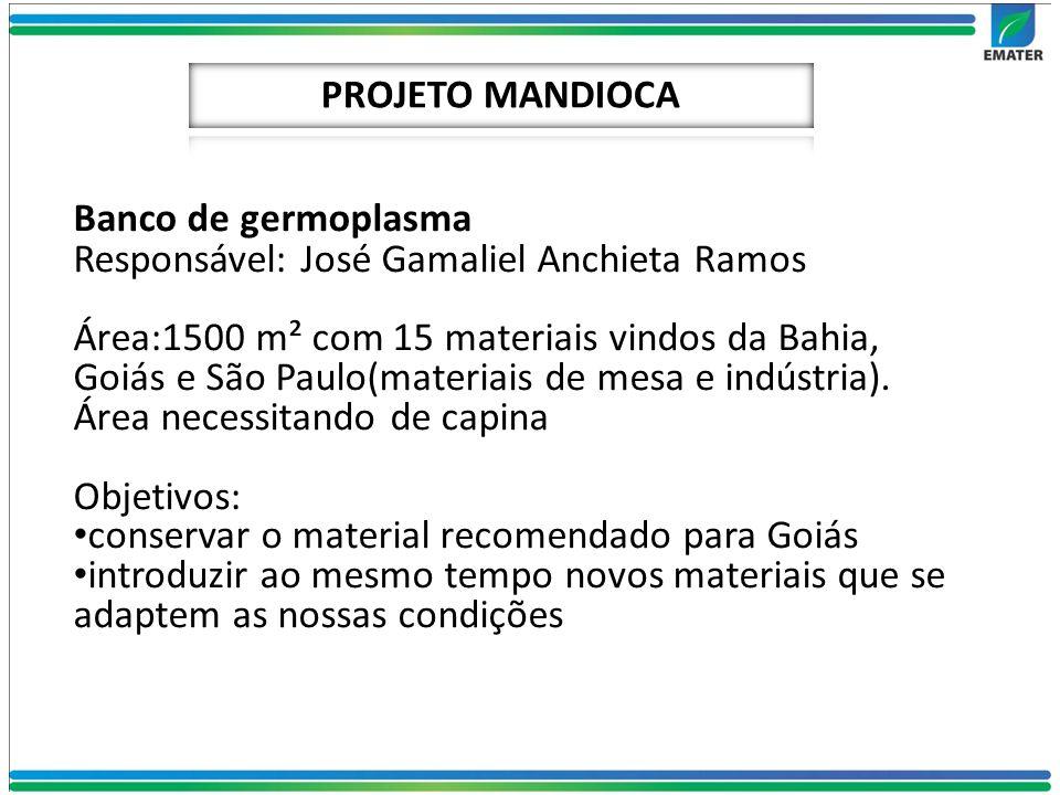 Banco de germoplasma Responsável: José Gamaliel Anchieta Ramos Área:1500 m² com 15 materiais vindos da Bahia, Goiás e São Paulo(materiais de mesa e in