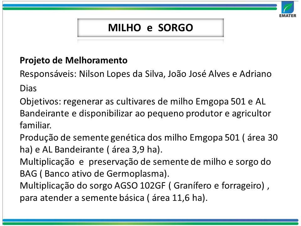 Projeto de Melhoramento Responsáveis: Nilson Lopes da Silva, João José Alves e Adriano Dias Objetivos: regenerar as cultivares de milho Emgopa 501 e A