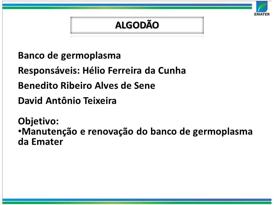 Banco de germoplasma Responsáveis: Hélio Ferreira da Cunha Benedito Ribeiro Alves de Sene David Antônio Teixeira Objetivo: Manutenção e renovação do b