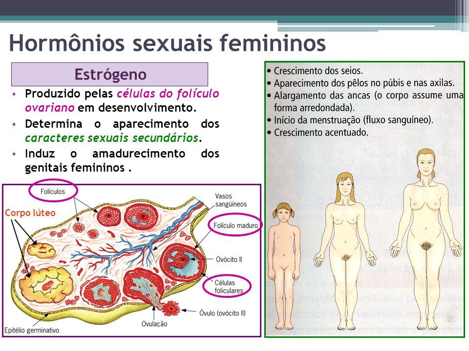 Hormônios sexuais femininos Estrógeno Produzido pelas células do folículo ovariano em desenvolvimento. Determina o aparecimento dos caracteres sexuais